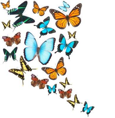 Obraz set tropikalne motyle