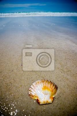 Shell na plaży