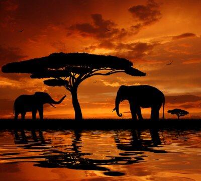 Silhouette dwa słonie w zachodzie słońca