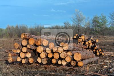 Sklep Drewno opałowe