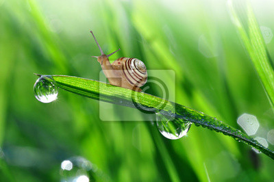 Ślimak na zroszone trawy