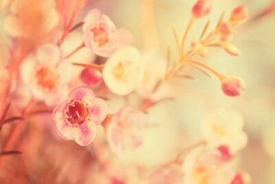 Obraz Słodki ton i miękki kwiat