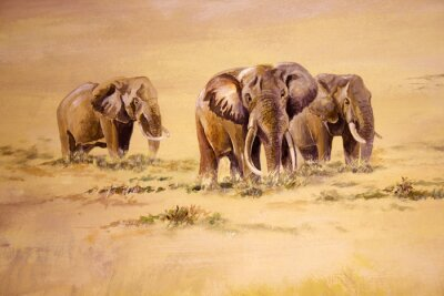 Obraz Słoń afrykański, Republika Południowej Afryki