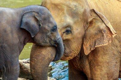 Obraz słoń i słoń dziecko