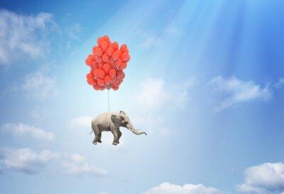 Obraz Słoń z balonów