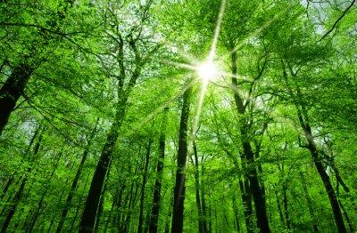 Obraz Słońce świeci przez gałęzie drzewa
