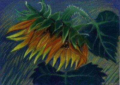 Obraz słonecznik. pastel