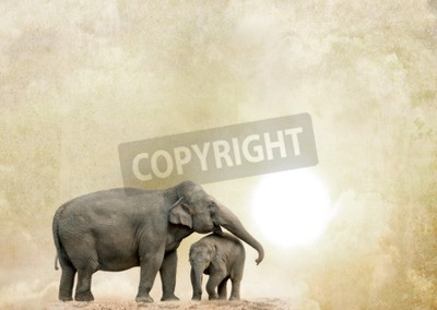 Obraz Słonie na tle grunge
