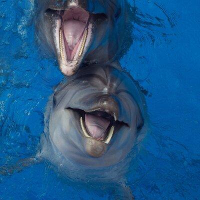 Obraz Smiling delfinów