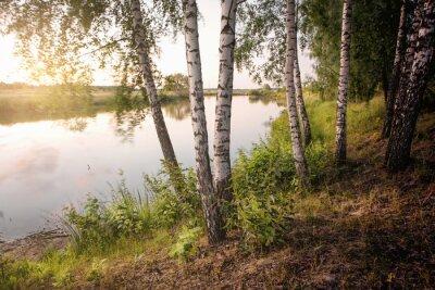 Obraz smukła brzoza