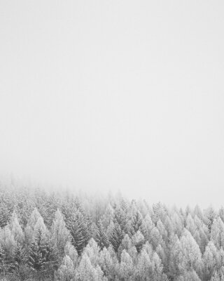 Obraz Snowfall
