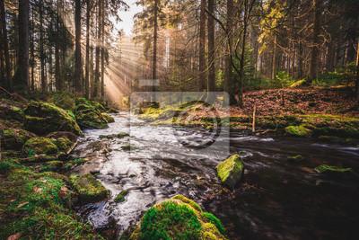 Obraz sonnenwald