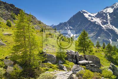 sosny i kamienie w Alpach we Włoszech