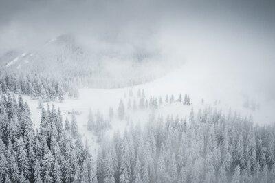 Obraz Splendid winter scene from a bird's eye view.