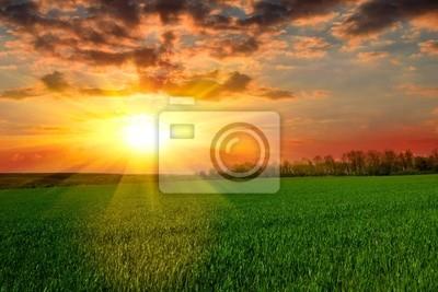 Spokojny zachód słońca nad zielonym polu