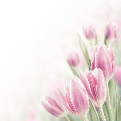Obraz Spring Background with Tulip