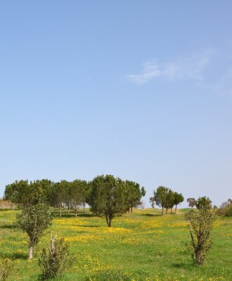Spring in southern areas of Israel