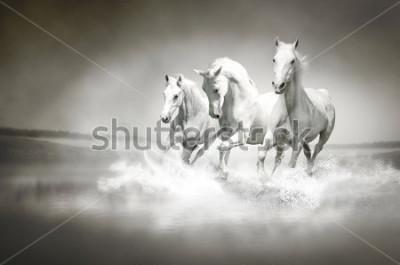 Obraz Stadia białych koni biegnących przez wodę