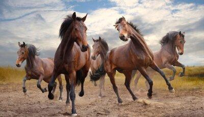 Obraz stado koni