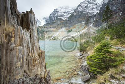 stare złamane sosny i widok na górskie jezioro