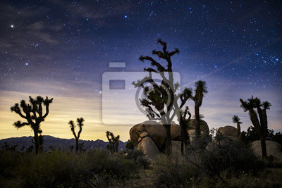 Obraz stars in the sky at joshua tree national park