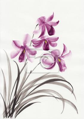 Storczyki Lilac