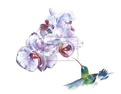 Storczyki The Flowers tropikalne kwiaty akwarela ilustracji samodzielnie na białym tle kartkę z życzeniami