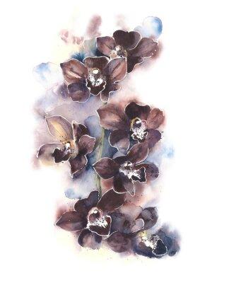 Obraz Storczyki The Flowers tropikalne kwiaty akwarela ilustracji samodzielnie na białym tle kartkę z życzeniami