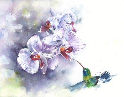 Obraz Storczyki z koliber akwareli malowanie ilustracji ręcznie na białym tle