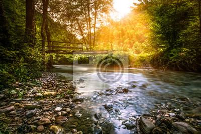 Obraz strumień Forrest