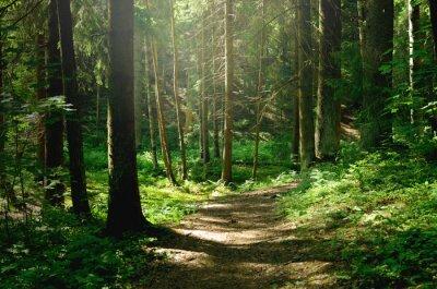 Obraz Summer sunny forest
