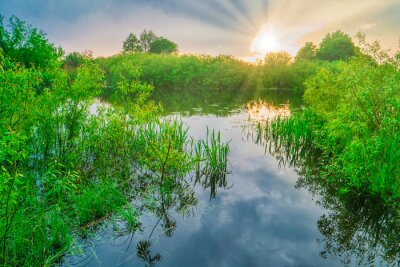 Sunset at river with reflection sun beams in water through green forest with green leaves