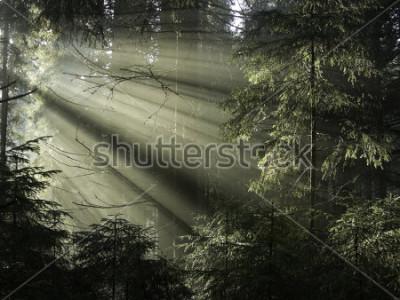 Obraz Światło słoneczne wpadające przez drzewa