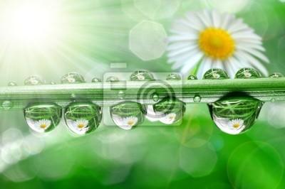 Świeża trawa krople rosy z bliska