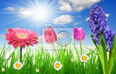 Świeża trawa wiosna z kwiatka na niebieskim niebie