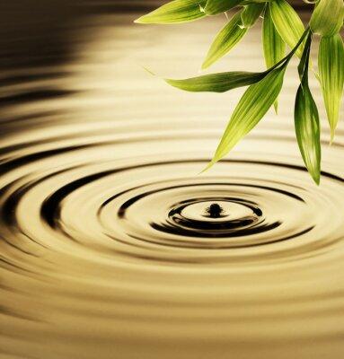 Obraz Świeże liście bambusa nad wodą