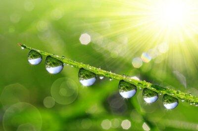 Obraz Świeże zielona trawa z krople rosy z bliska. Rodzaj t