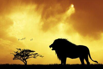 Obraz sylwetka lwa na zachodzie słońca