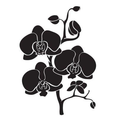 Obraz Sylwetka orchidea oddział