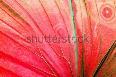 Obraz Szczegółowa makro- fotografia czerwony tropikalny motyla skrzydło