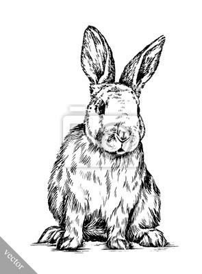 Obraz Szczotka malarstwo tuszem wyciągnąć królika odizolowane ilustracji