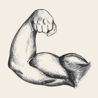 Obraz Szkic ilustracji ludzkiego mięśni prawej ręki męskiej