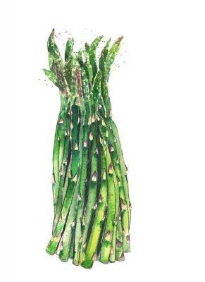 Szparagi wiązka warzyw akwarela ilustracji samodzielnie na białym tle
