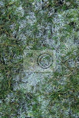 Obraz Szron na trawie
