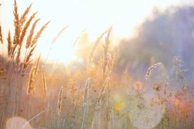 Obraz Sztuka jesień słoneczny charakter tle