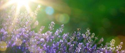 Obraz sztuki latem lub wiosną piękny ogród z kwiatów lawendy