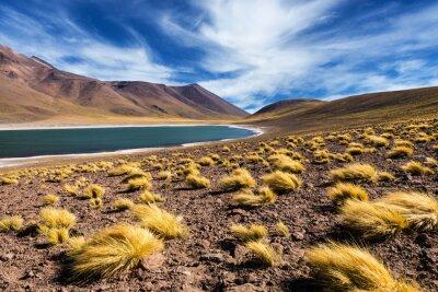 The Meniquez Lagoon in the Atacama Desert, Chile, 2013