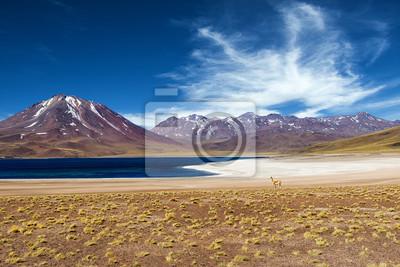 The Miscanti Lagoon in the Atacama Desert, Chile, 2013