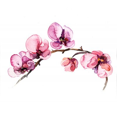 Obraz the watercolor flowers orchid isolated on the white background