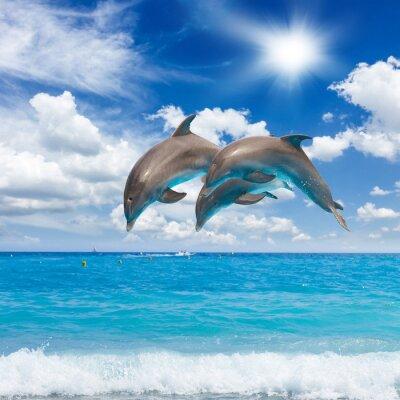 Obraz three  jumping dolphins